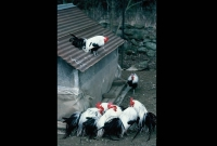 animals_026