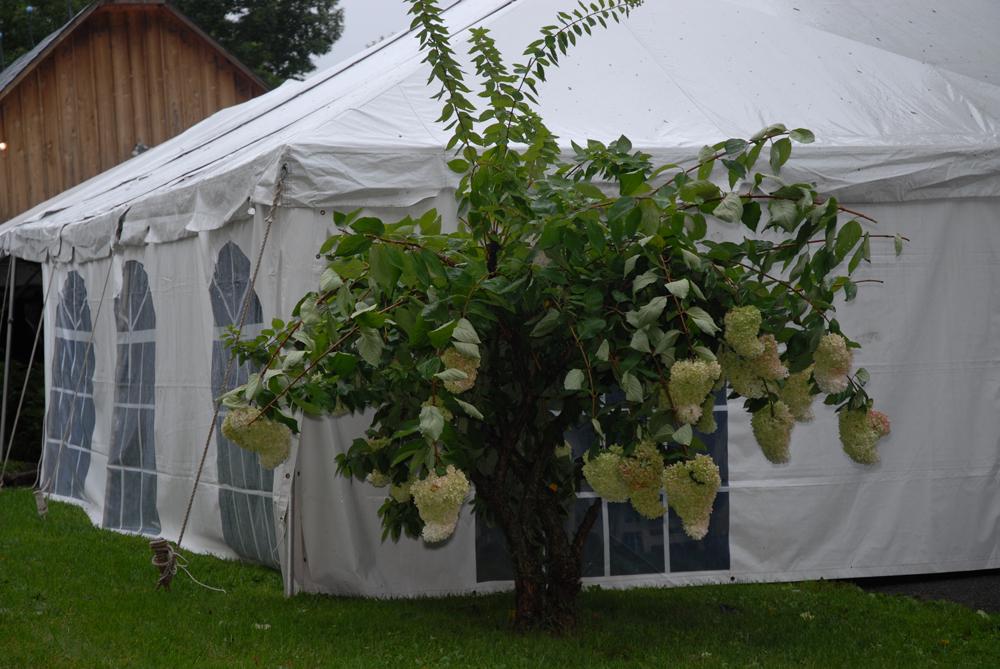 weddings_061